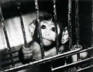 Animal-testing-cage